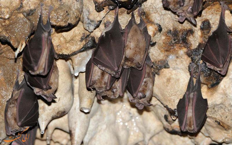 جاذبه های گردشگری ایلام - غار خفاش ایلام