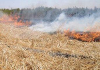 مهار آتش سوزی در مزارع شهرستان ایوان